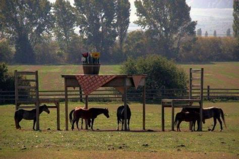 cheval_table