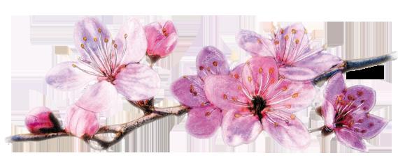 fleurs_pommier